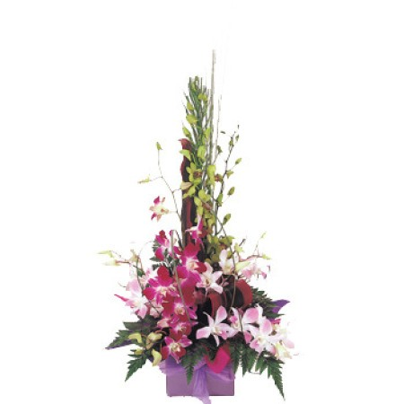 Singapore Rain forest (Orchid Box Arrangement)